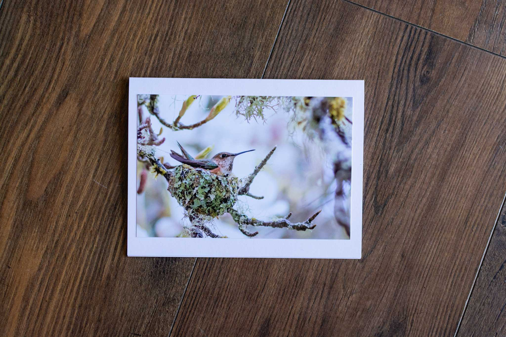 Nesting Hummingbird Greeting Card by Adele Cave Photography